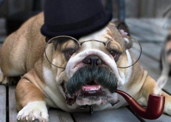 funny detective dog