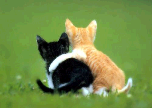 friendship cat