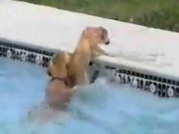 Σκύλος «ναυαγοσώστης» σώζει κουτάβι από πνιγμό