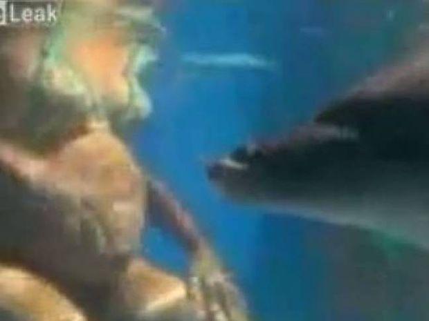 Συγκλονιστικό: To θαύμα της γέννησης σε πισίνα παρέα με ένα δελφίνι