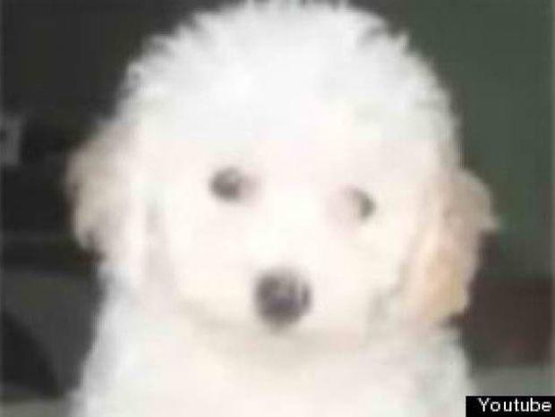 Έπαθε ΣΟΚ: Ανακάλυψε ότι το σκυλάκι που αγόρασε ήταν...