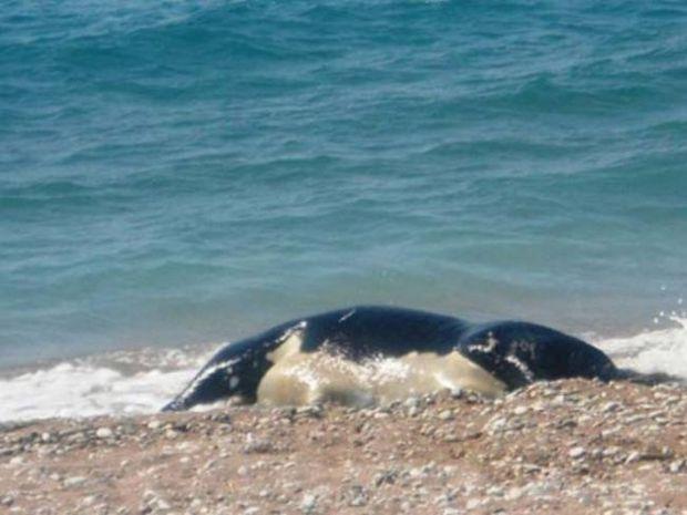 Ρόδος: Οι λουόμενοι έπαθαν σοκ με αυτό που ξέβρασε η θάλασσα