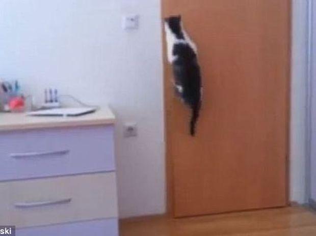 ΔΕΙΤΕ: Απίστευτη γάτα ανοίγει όχι μια αλλά πέντε πόρτες για να βγει έξω!