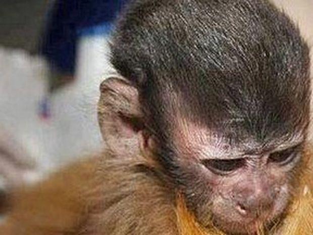 ΣΥΓΚΛΟΝΙΣΤΙΚΗ ΕΙΚΟΝΑ: Ποιός είπε πως τα ζώα δεν έχουν αισθήματα;