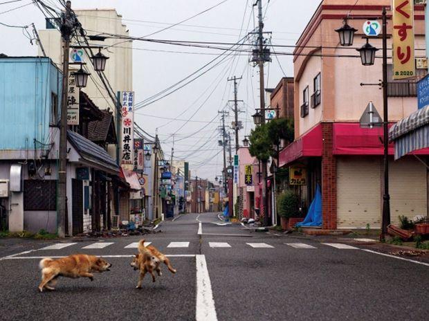 Φουκουσίμα: Στην απαγορευμένη ζώνη