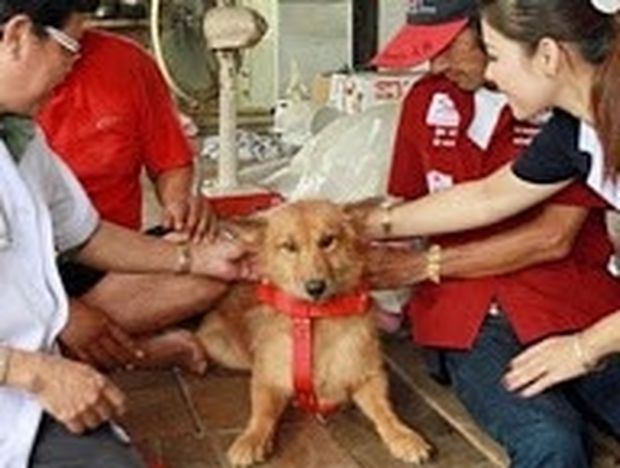 ΑΠΙΣΤΕΥΤΟ: Σκύλος έσωσε νεογέννητο μωρό που πέταξαν άγνωστοι στα σκουπίδια
