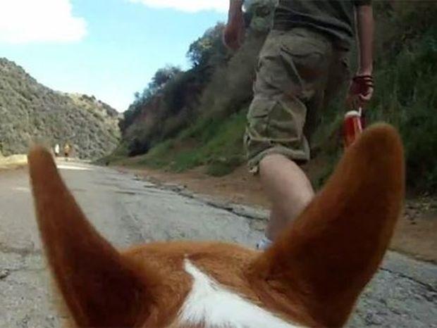 Ο κόσμος από την οπτική ενός σκύλου (Video)