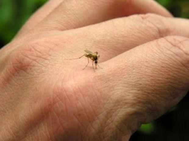 Τα κουνούπια τσιμπάνε μόνο εσένα; Μάθε γιατί!