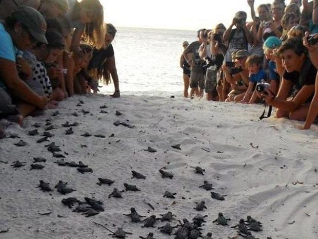 ΜΟΝΑΔΙΚO VIDEO: Ανθρώπινο τείχος για τα νεογέννητα χελωνάκια!