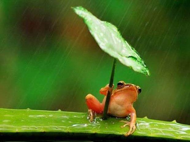 O... έξυπνος βάτραχος που ξετρέλανε το διαδίκτυο! (pics)