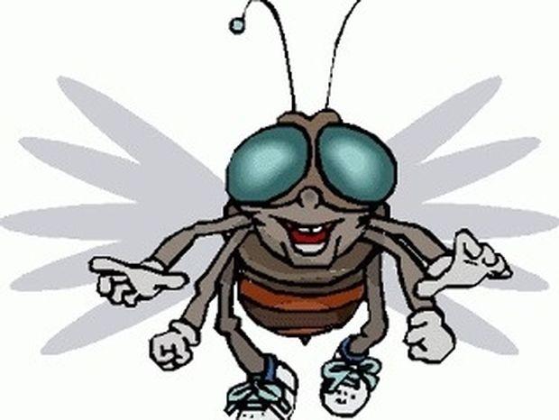 Προσφέρουν τίποτα χρήσιμο οι μύγες ή είναι μόνο μπελάς;