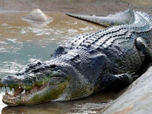 Κροκόδειλος κατασπάραξε έναν 24χρονο μπροστά στους φίλους του