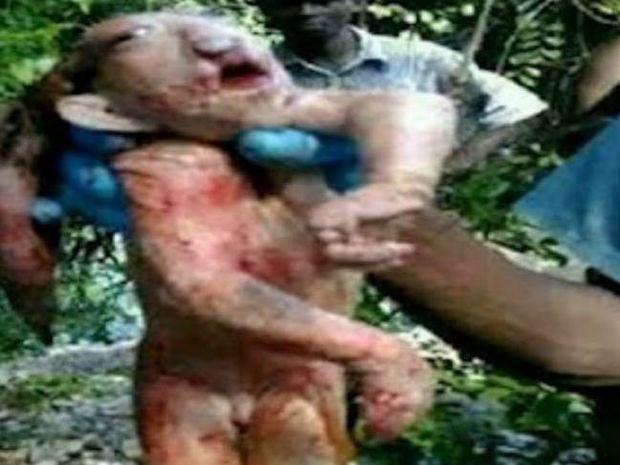 ΑΠΙΣΤΕΥΤΕΣ ΕΙΚΟΝΕΣ: Άγνωστο πλάσμα βρέθηκε στην Αφρική!
