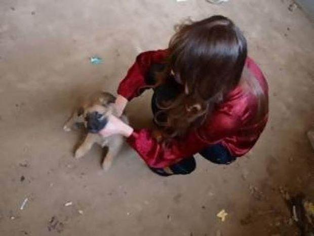 ΕΙΚΟΝΕΣ ΣΟΚ: Μοντέλο σκοτώνει κουτάβι σε φωτογραφική επίδειξη!