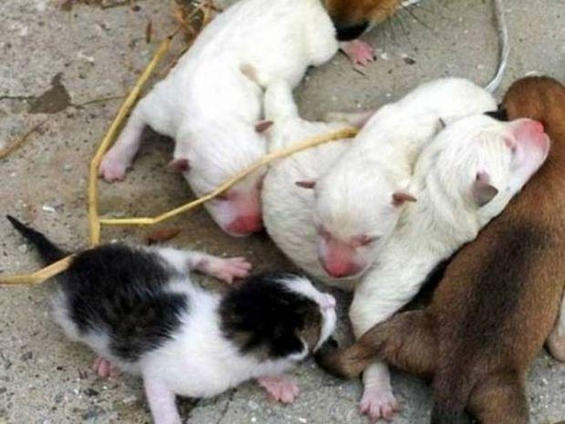 ΑΠΙΣΤΕΥΤΟ: Σκύλος γέννησε... γάτα! (pics)