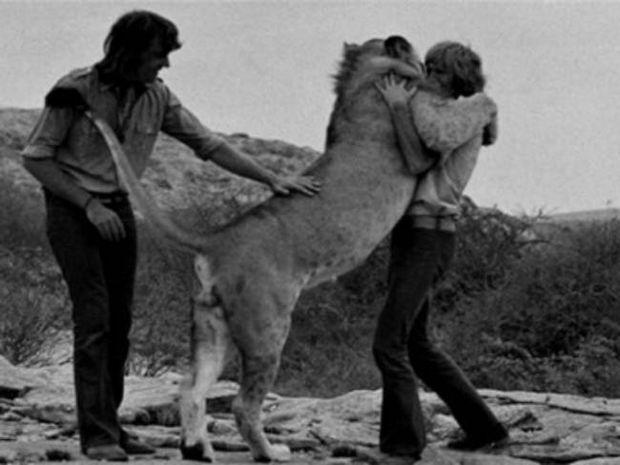 Βίντεο: Ένα λιοντάρι που αγάπησε ανθρώπους