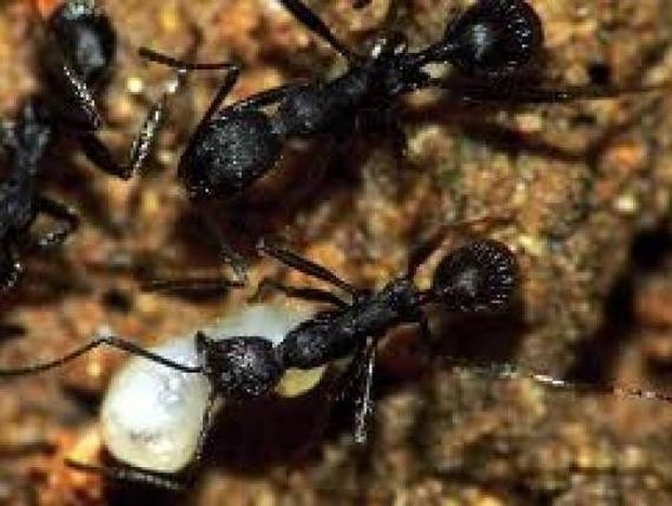 Απίστευτο: Δείτε το εσωτερικό μιας φωλιάς μυρμηγκιών (βίντεο)