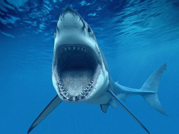 Φωτογραφία που σοκάρει: Τον κατάπιε καρχαρίας και παλεύει για να ζήσει!
