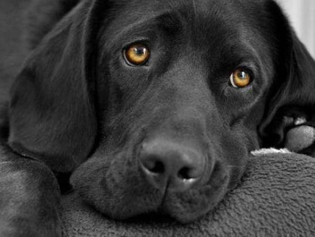 Δείτε πώς έκανε ο σκύλος όταν γύρισε ο ιδιοκτήτης του μετά από 6 μήνες