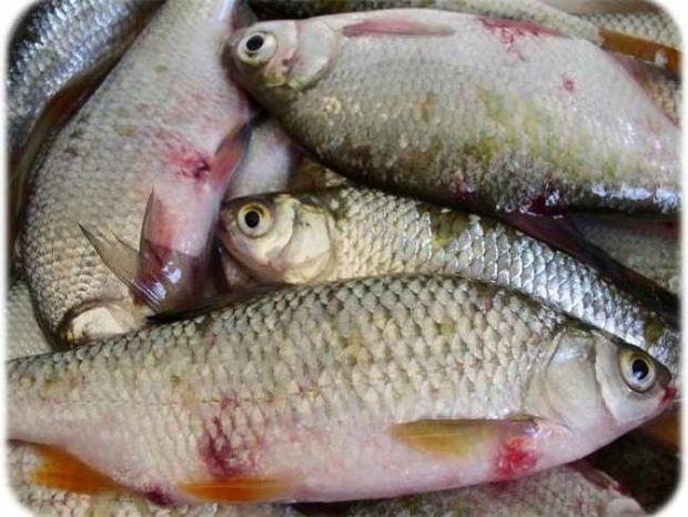 Δείτε πώς μπορείτε να καταλάβετε αν ένα ψάρι είναι φρέσκο