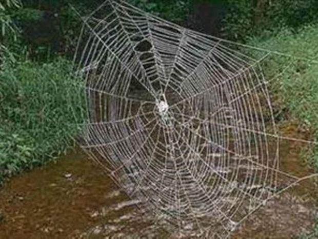Απίστευτο βίντεο: Δείτε πώς μια αράχνη υφαίνει τον ιστό της