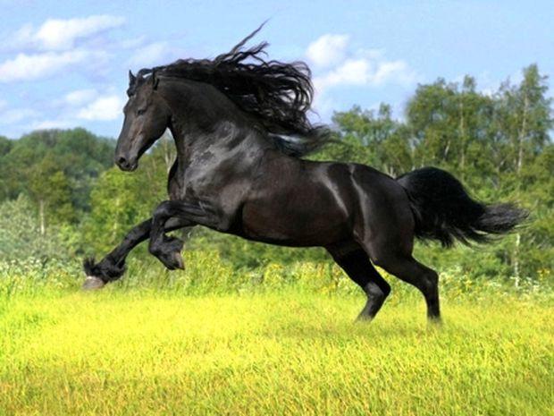 Φενγκ Σούι: Άλογο, το σύμβολο της επιτυχίας