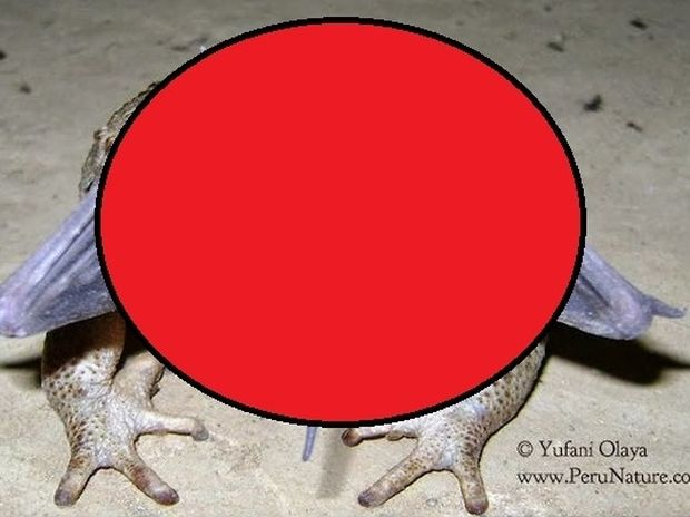 ΑΠΙΣΤΕΥΤΟ: Τι μπορεί να έχει ο βάτραχος στο στόμα του;