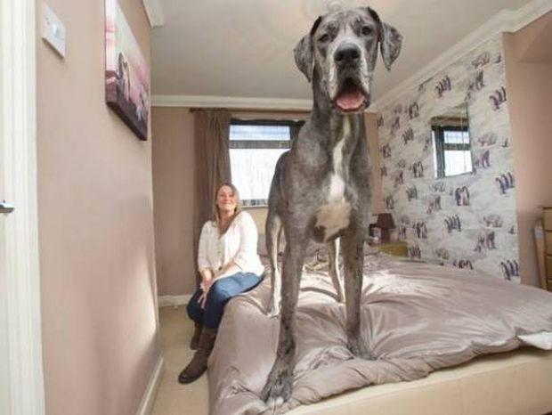 Το μεγαλύτερο κουτάβι που είδατε ποτέ