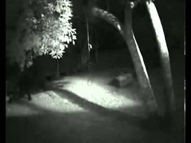 Ανατριχιαστικό βίντεο με... λυκάνθρωπο αναστατώνει ολόκληρη πόλη
