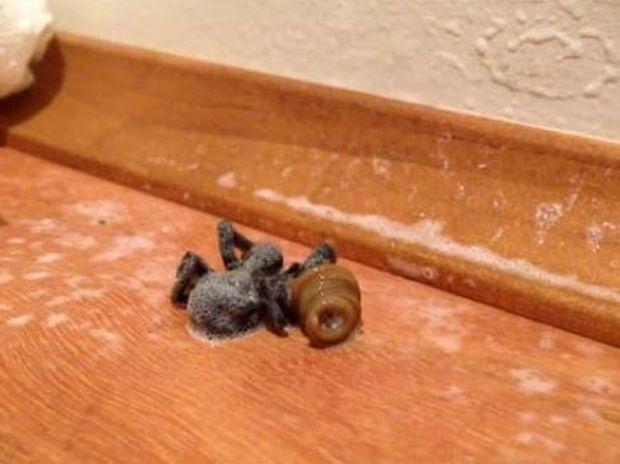 Bίντεο: «Τέρας» ξεπροβάλλει μέσα από νεκρή αράχνη