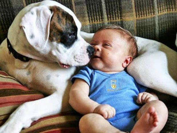 Διαβάστε το, αξίζει: Οι 10 ευχές ενός σκύλου...