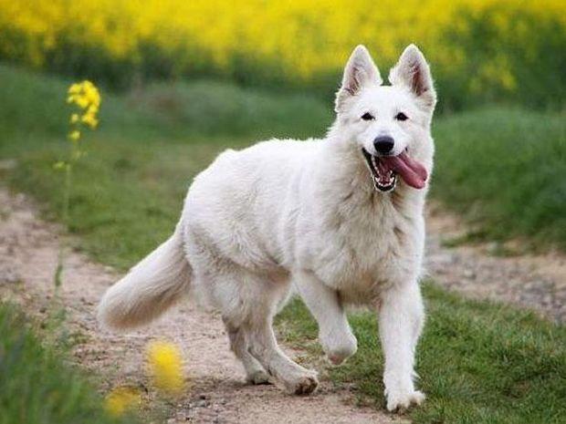 Δείτε τη γλώσσα του σώματος των σκύλων
