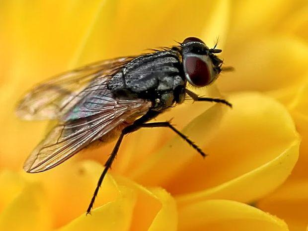 Απαλλαγείτε με φυσικό τρόπο από τις μύγες