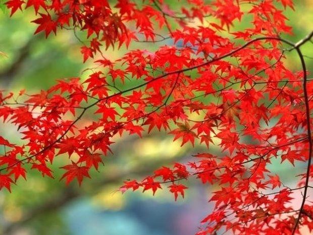Γιατί να αγαπήσετε το φθινόπωρο!