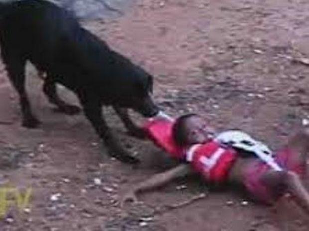 ΑΥΤΟ ΘΑ ΠΕΙ ΑΦΟΣΙΩΣΗ! Σκύλος σώζει παιδάκι που κολυμπάει επειδή νομίζει ότι πνίγεται!