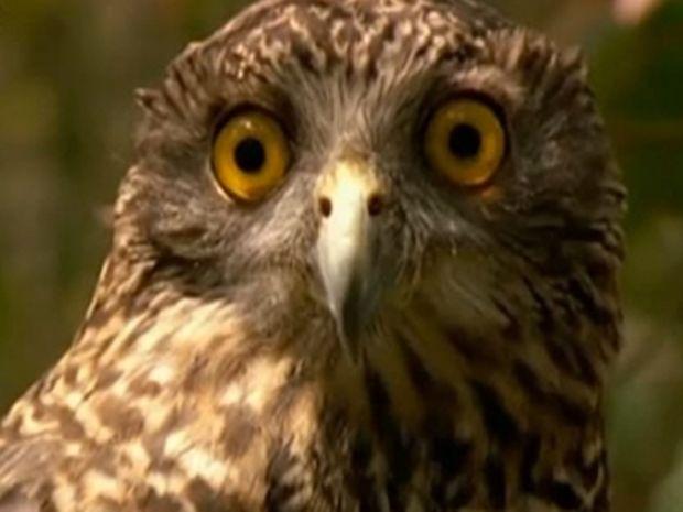Το καλύτερο αστείο βίντεο που έχετε δει για ζώα