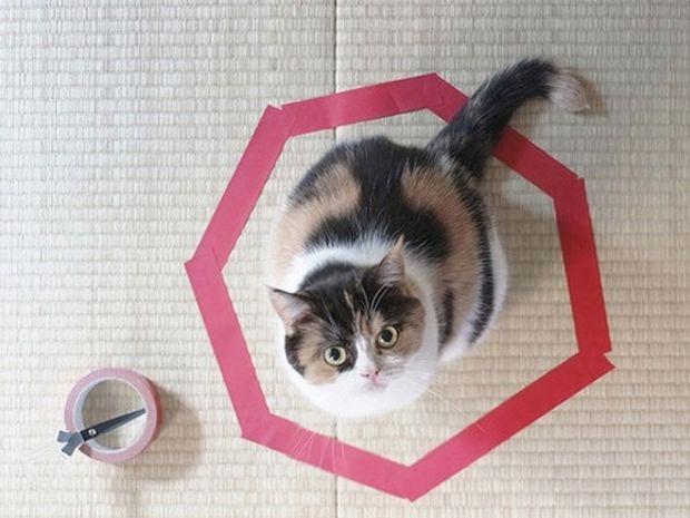 ΑΠΙΘΑΝΟ ΚΟΛΠΟ: Πώς μπορείτε να... παγιδέψετε μια γάτα!