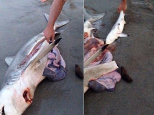 Αστρολογική επικαιρότητα, 7/12: Άντρας ξεγέννησε μικρά καρχαριάκια από τη νεκρή μάνα τους