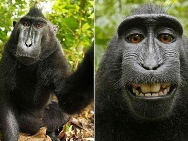 Οι καλύτερες Selfies που τραβήχτηκαν ποτέ!!!