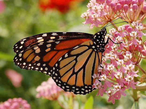Η μεταμόρφωση - Ένα ακόμα θαύμα της φύσης (video)
