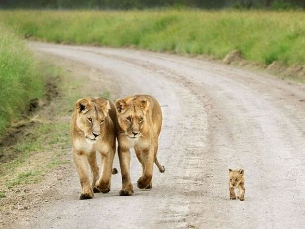 Πανέμορφα οικογενειακά πορτραίτα από το ζωικό βασίλειο