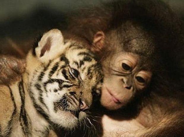 Φωτογραφίες σπάνιας φιλίας ζώων που αξίζει να δείτε!