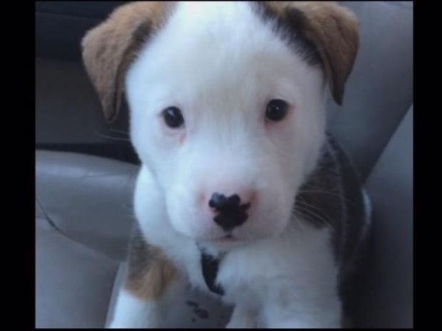 Το πιο χαριτωμένο βίντεο που είδατε σήμερα! Το σκυλάκι που έχει λόξιγκα!