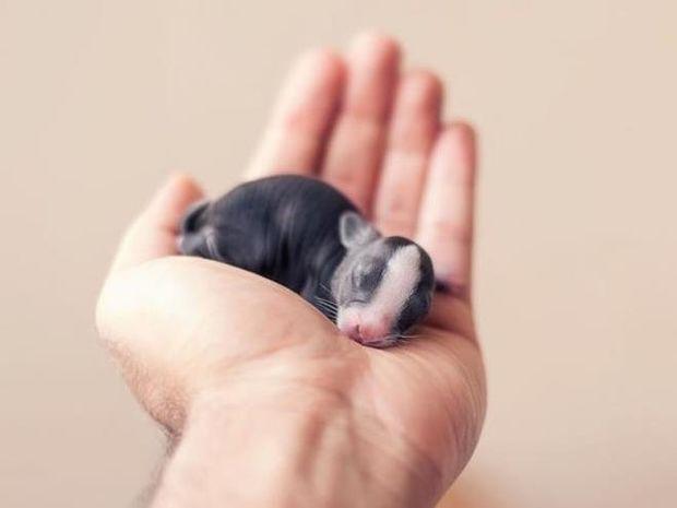 Οι πρώτες 30 μέρες ενός νεογέννητου κουνελιού! Ό,τι πιο γλυκό είδατε σήμερα!