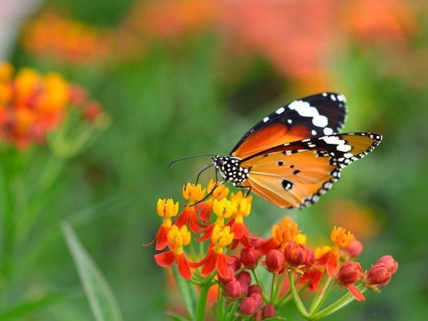 Οι τυχερές και όμορφες στιγμές της ημέρας: Πέμπτη 11 Ιουνίου