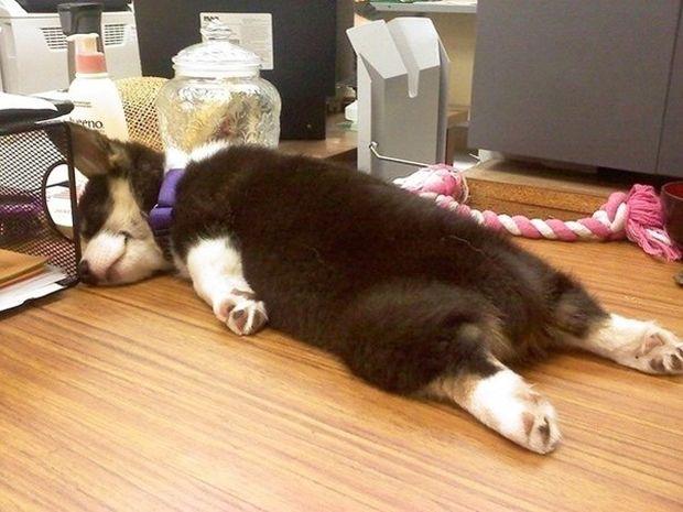 Αυτό συμβαίνει όταν παίρνεις το σκύλο σου στη δουλειά! (photos)