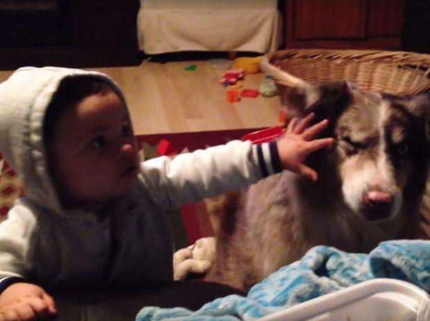 Απίστευτο! Δείτε αυτόν το σκύλο να προσπαθεί να πει «μαμά»! (video)