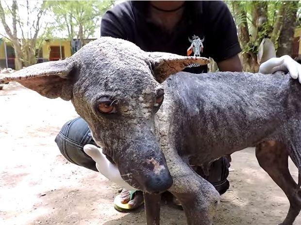 Σώθηκε από θαύμα! Δείτε τη μεταμόρφωση αυτής της ταλαιπωρημένης σκυλίτσας! (video)