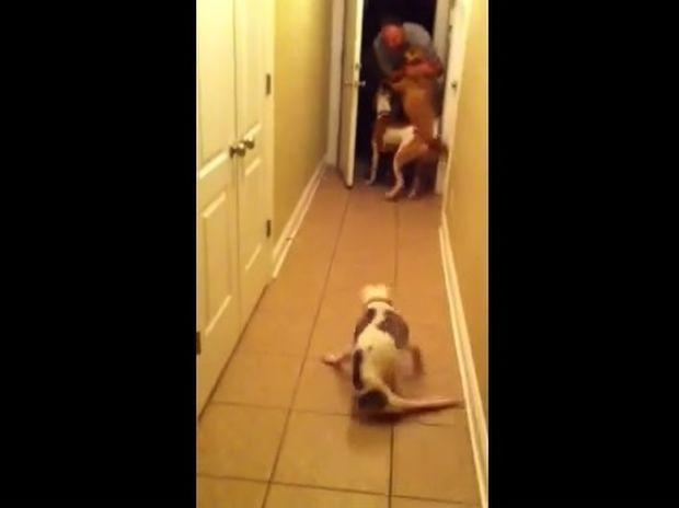 Μοναδικό! Η ανάπηρη σκυλίτσα υποδέχεται τον ιδιοκτήτη της με τον πιο ξεχωριστό τρόπο! (video)