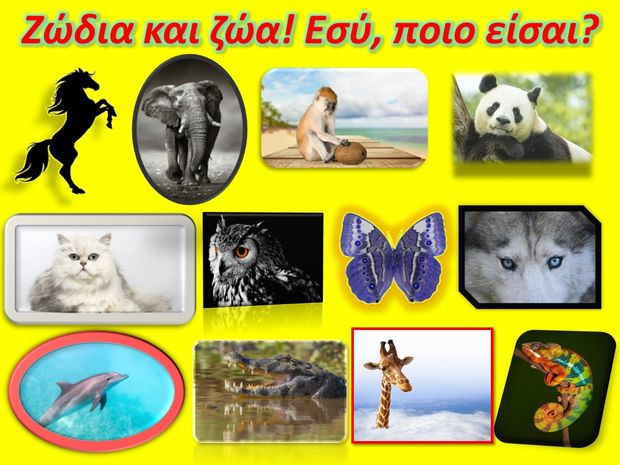 Αν ήσουν ζώο, ποιο θα ήσουν;